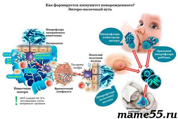 Как формируется иммунитет новорожденного